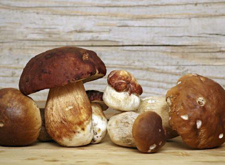 Funghi:un toccasana per ilsistema immunitario